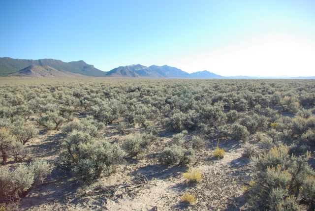 "Sage brush steppe area in Cave Valley, Nevada with well developed microbiotic crusts just east of the ""habitat restoration"" project. © Ken Cole"