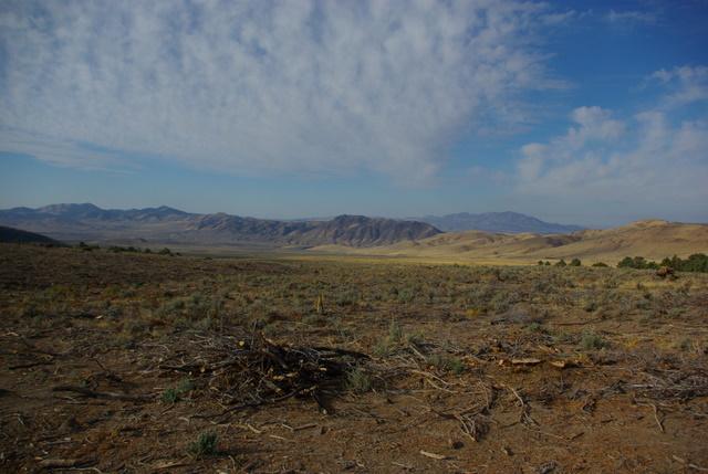 Pinyon Juniper Clearcut, Nevada © Ken Cole